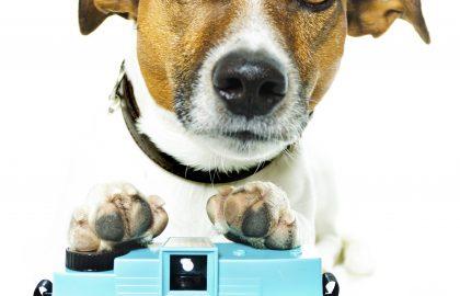 מזון יבש לכלבים – כל מה שצריך לדעת