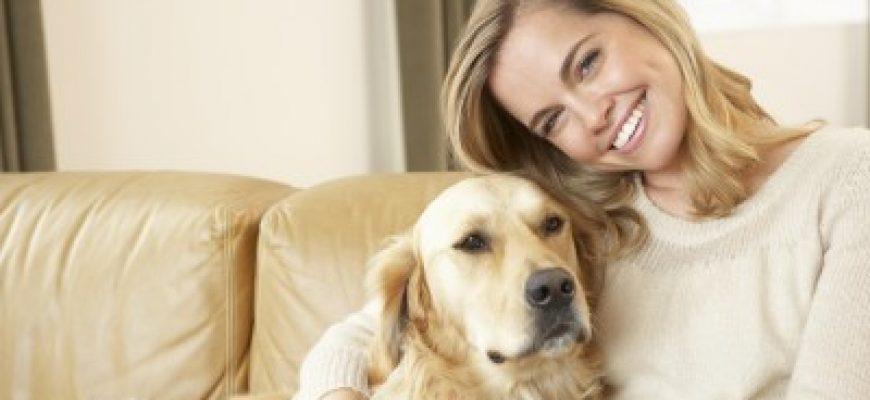 איך מחנכים גור חדש באמצעות מזון לכלבים