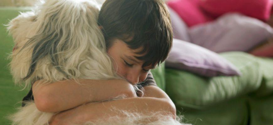 כללים לשמירה על היגיינה וניקיון באוכל לכלבים