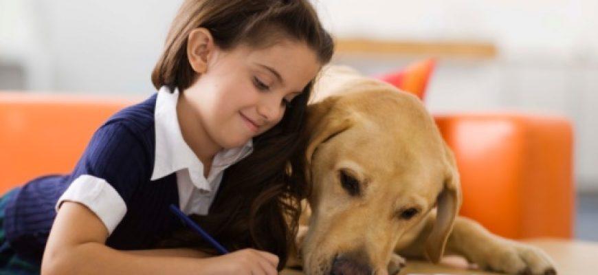 קולרים לבריאות הכלב ולנוחות של בעליו